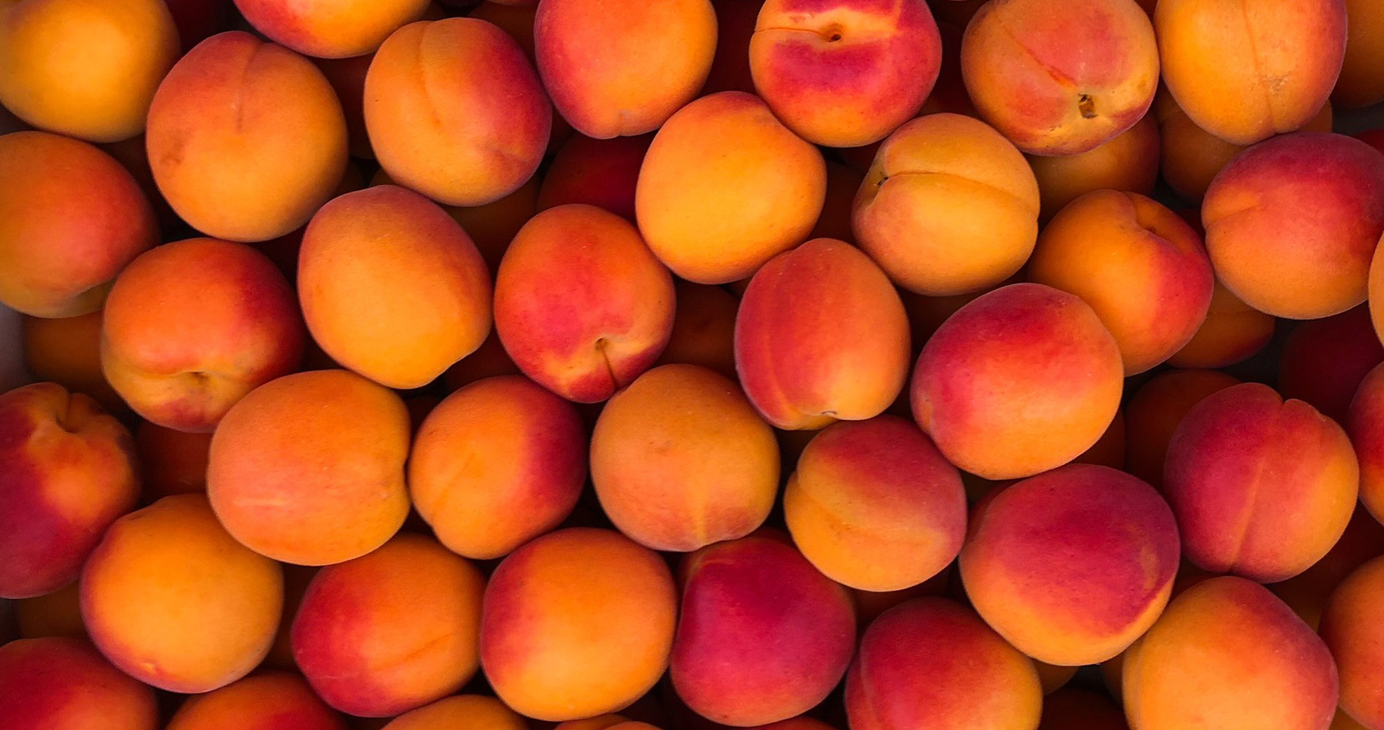 Apricots in Paris by Skip Weeks